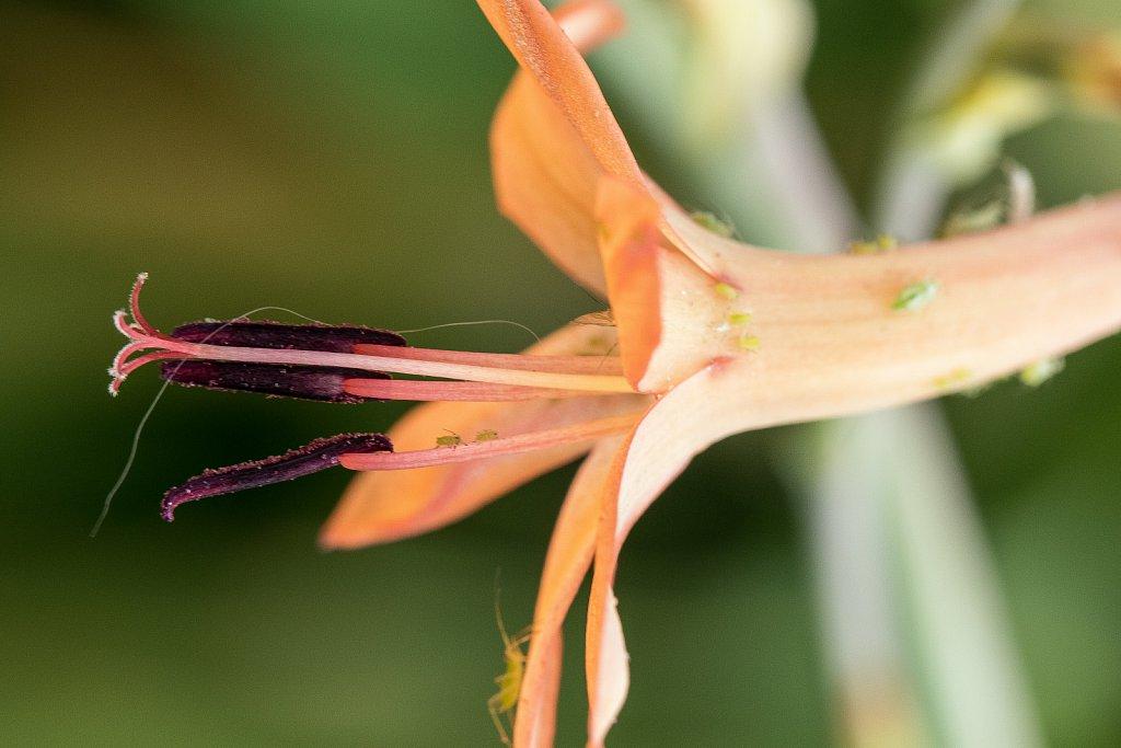 Von Blüten und Läusen